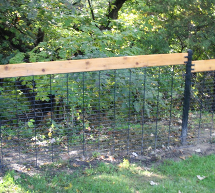 This fence allows nature to be seen but keeps out those larger trepassers